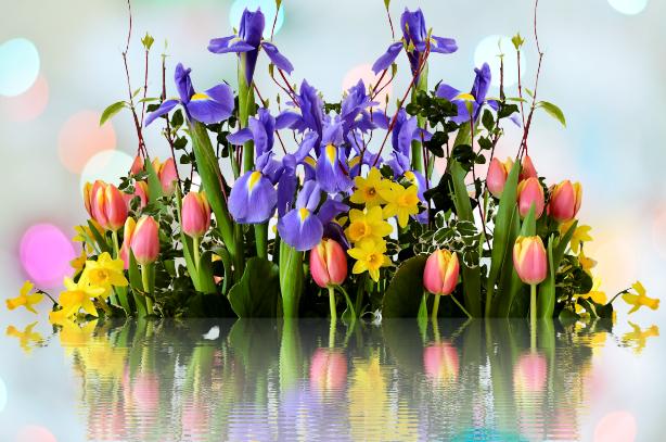 spring-2393429_1280-removebg-preview